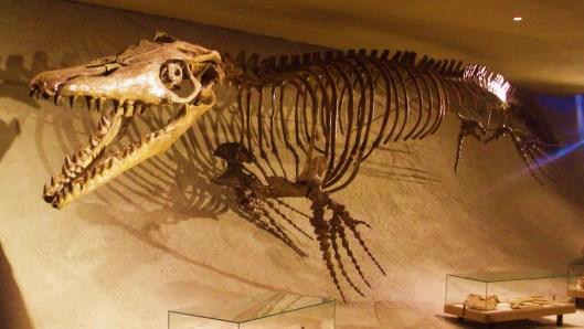 Mosasaurus_hoffmannii_-_skeleton
